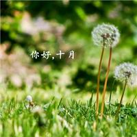 彼岸繁花,开一千年,落一千年,花叶不相见。