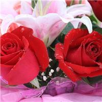 玫瑰图片大全大图唯美:玫瑰花图片大全大图