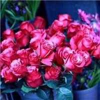 玫瑰花图片大全999朵:玫瑰花图片唯美