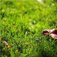 风景图片大全高清花草 最漂亮的花草风景图片