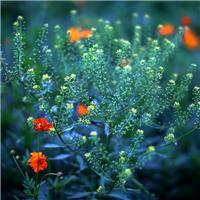风景的花草微信图片 微信头像图片大全花朵
