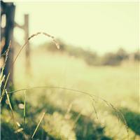 美好阳光图片唯美