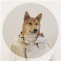 单身狗的图片
