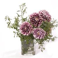 多色鲜花微信图片大全 微信头像花卉图片大全 微信壁纸图片花朵