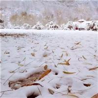伤感图片_慢听 雪落下的声音