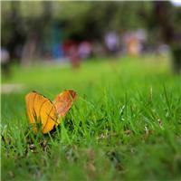 生活是一只蝶