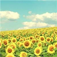 充满正能量的自己,像向日葵做一个积极吸收正能量的