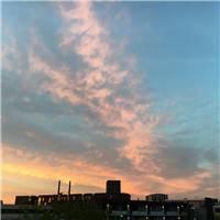 伤感图片_荷兰代尔夫特,也想像鸽群一样围着教堂转,然而你是云鸽,形单影只.