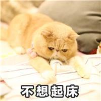 不想起床 - 一只满脸都是愁容和不屑的橘猫