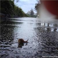 下雨天,一个人撑伞,一个人擦泪,一个人好美