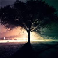 孤独的树,剪影,光,晚上