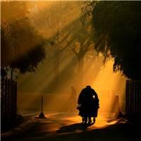 深秋的早晨,晨雾未散,太阳出来了,一个中年男子推着一车菜吃力的走过