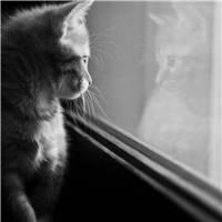 每一个白天看起来若无其事的人,都有可能某个深夜在被窝里偷偷哭泣过.