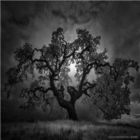 孤独伤感绝望意境图,我们是如此孤独的活着#黑白#树木