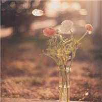 是昨天死去的人奢望的明天;你所厌恶的现在,是未来的你回不去的曾经#小清新#花草