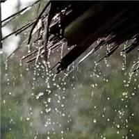 又会凋零多少的落红 或许光阴的故事总会老去 过往终是回不去的曾经#下雨