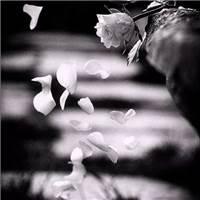 有些人,再也回不到从前了#黑白#花朵#非主流