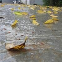感觉秋天是一个忧伤的季节,特别是在下雨起风的时候那种悲凉