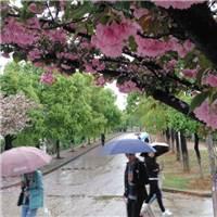 清明时节雨纷纷#街拍#下雨