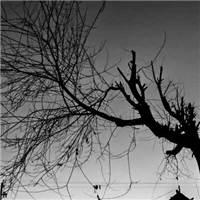 有一种前路漫漫雨纷纷的人生感慨#树木#黑白