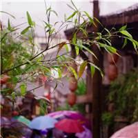 《四月的雨》风里雨里,淫雨纷纷,想入非非,前尘苦海,古屋不再.#街拍#小清新#花草