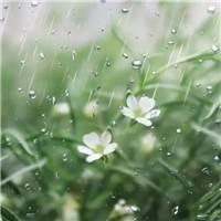 清明时节雨纷纷#花草#小清新#森系