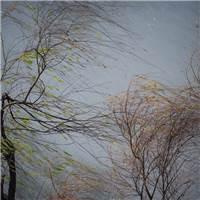 风吹雨打#树木#伤感