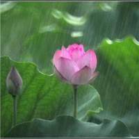 风吹雨打#花草#小清新