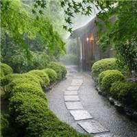 雨纷纷旧故里草木深#下雨#意境
