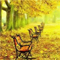 一世等待,轻抚着尘世虚华的尘烟,错落的似水流年,韶华易老#秋天#树叶