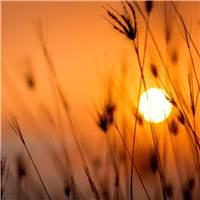 温暖唯美的阳光美景桌面壁纸#夕阳#花草#唯美