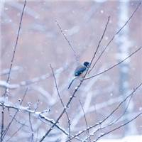 呆萌小鸟冰雪中秀恩爱,单身鸟:让我一只鸟静静呆着#鸟儿