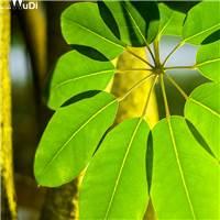 希望之树的十片叶子#树木#树叶#小清新#森系