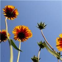 代表希望的花#花草#小清新