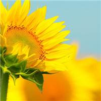 尽管现实残酷,生活还得继续,希望我爱的人和爱我的人都快乐#花草