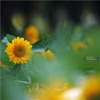 希望每一天都是充满阳光#花草#小清新#意境#森系