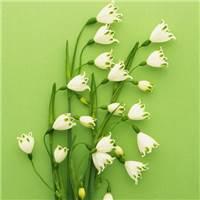 铃兰水仙(雪片莲,雪铃花,雪滴花)花语:希望雪滴花生命力强,勇往直前的#花草