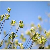 ——树木很繁茂,不惧炎炎烈日努力地生长,生命总是坚韧不拔充满希望的#花草#小清新