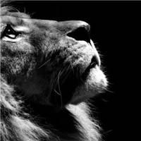 人生来就是孤独的,不要奢望能够依靠谁,哪怕是至亲至爱#动物#黑白