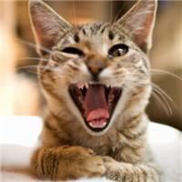 不要再郁闷了孩子,要像个神经病一样活泼开朗! #搞笑#猫咪