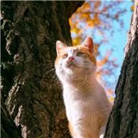 工作疲劳了感觉孤独了生活无聊#猫咪