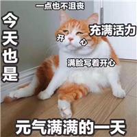 做招聘,累成狗!#猫咪#文字控