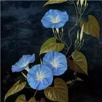 感叹人生聚散#花朵#小清新