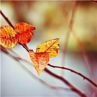 成败聚散,都是人生中的一种成长.#树叶#秋天