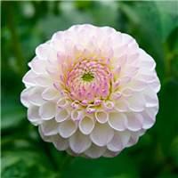人生如戏,聚散不由人!#花朵#小清新#森系