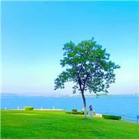 最美的相遇,不言过往;最好的离别,不问归期;#风景#海边