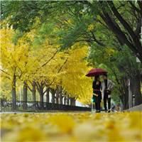 一首秋日长歌,送别海淀深情的秋!#街拍#秋天