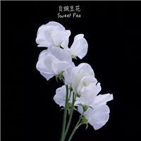 最美的小白花,思念离去的那个人#小清新#花朵