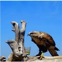 在我们所向往的诗和远方,留下最美的身影——呼伦贝尔#鸟儿