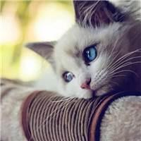 对一个人的喜欢和不喜欢#猫咪